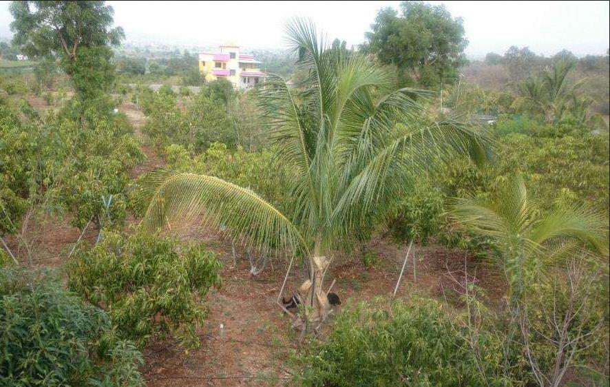 Agricultural land at Deolali